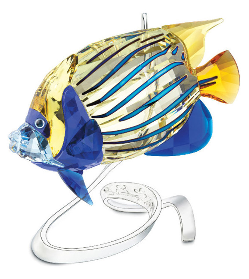 S1072590 - Emperor Angelfish
