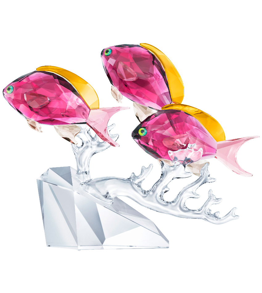 S5428652 - Anthias Fish Trio